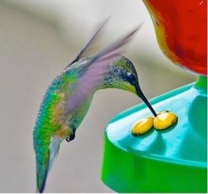 a hummingbird